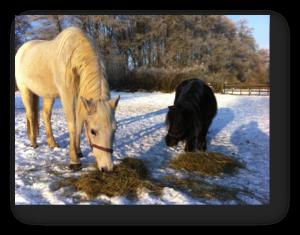 Pferd_Heu